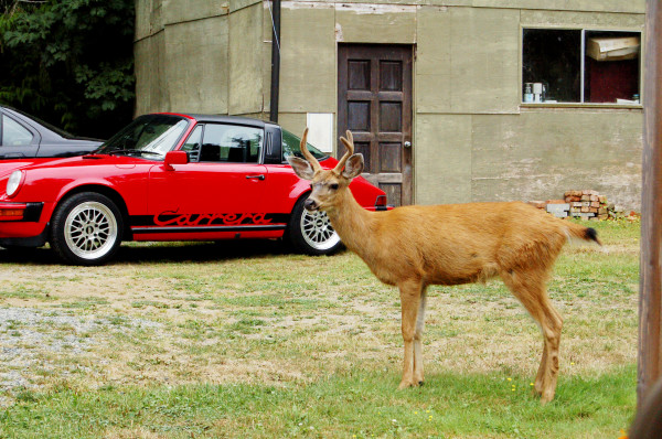 deer and porsches